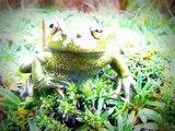 Poison dart frog - RANAS VENENOSAS- Baumsteigerfrösche- d'amphibiens