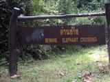 Khao Yai National Park, Thailand (ANGRY ELEPHANTS!)