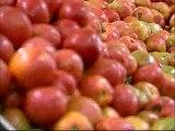 Manejo de insetos-praga e doenças na cultura do tomateiro - Dia de Campo na TV