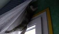 Les chatons qui grimpent aux rideaux