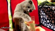 Funny Cats doing stupid things with peoples - challenge try not to laugh