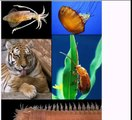 Quran science: Every animal either has 2 legs or 4 legs or no legs