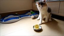 chats + Citron = MDR
