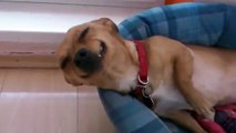 Funny smiling dog - Our PUNTA from Slovakia :)