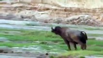 Animal Planet 2015 - Discovery Channel - Wildlife Animals - Lion Documentary [720 HD]