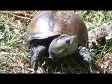mis animales y tortugas