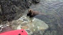 Sea Otter Sighting in the Salish Sea