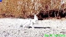 Funny Animals -Funny Animals Videos - Funny Animals Videos Compilation Part 1