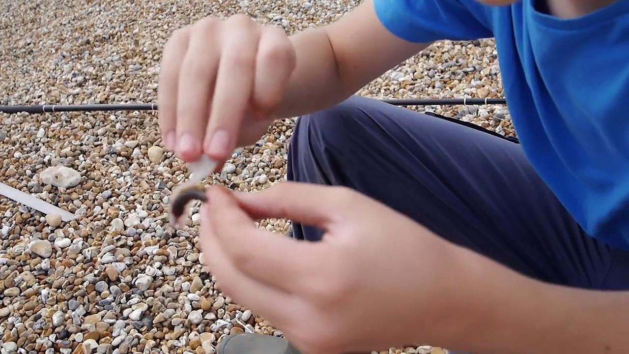 Bass Fishing at Littlestone