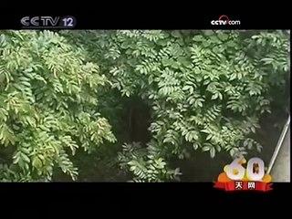 受伤小象现身野象谷 森林守护者救助生命 - part 2
