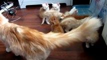Failed Cat Jump Scares Kittens