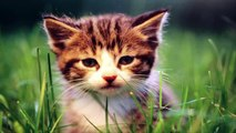 cat breeds, cat games, cat videos, cats, cats and dogs, dogs, feral cat,