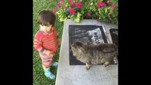 Funny cats and babies playing together - Cute cat and baby compilation 2015 | MrFunny