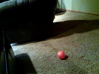 Pug vs. Ball