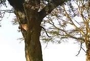 East Africa  Safaris - Kenya Camping Safaris and Kenya Lodge Safaris