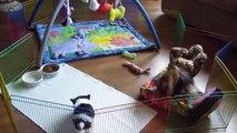 Angelique & friends Angelique is a toy sized Biewer Yorkshire Terrier A La Pom Pon part 2