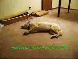 TECHNO REMIX: Bizkit the Sleep Walking Dog