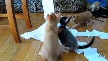 Compilation de chats s'amusant avec du papier toilette
