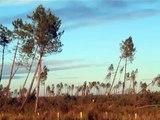 vue après la tempête klaus à Pissos dans les landes