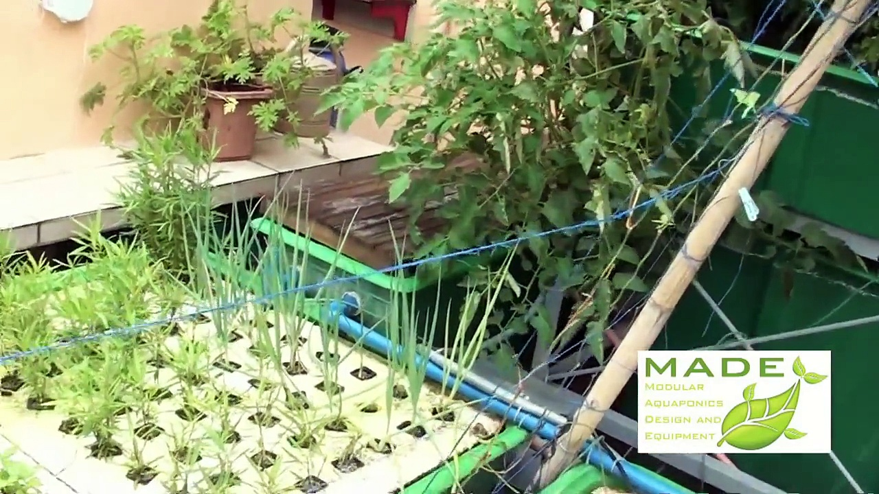 Urban Farming Homsteading, Aquaponics Philippines, MADE Growing Systems July 2012 Update