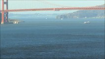 Humpback  Whales  seen from  shore in San Francisco (close to Golden Gate Bridge)  on June 25, 2015