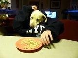 Human dog ! Arwen à table!!!!!    Notre super chien!   so funny !