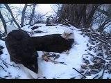 DECORAH EAGLES  3/22/2015  6:27 PM  CDT     DAD BRINGS MOM A HEADLESS FISH