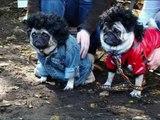 Compilation d'images drôles et insolites animaux - chiens