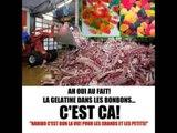 Additif E441 : La gélatine de porc est partout !!! (Montage : Collectif Podbete)
