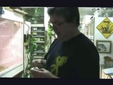 Het. Pied (f) to het Pied/Spider (m) Ball Python - Henry Piorun Reptiles