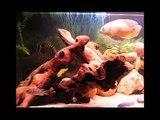 Aquarium 300 Litres - Cichlides africains - Malawi