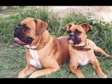 Our top 10 sweetest dog breeds