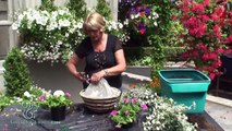Hanging Baskets - New Styles (Twig Basket)