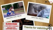 Funny Videos   Funny Animal   Best Funny Animals compilation 2015   funny pets   funny pets videos