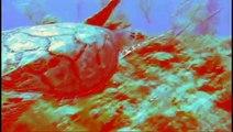 Virtual Dive: Hawksbill Seaturtle l www.AquaSportsInc.com l Scuba Diving l Florida l Fort Lauderdale l Ft Lauderdale l Pompano l Miami l Key Largo l Keys l Bahamas