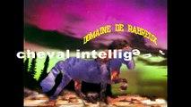 CHEVAL ISLANDAIS -INTELLIGENT-DOMAINE DE RABREUX-40--Intelligent horse skeifa