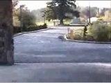 WOW! Skating Dog