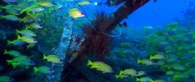 Plongée à l'île de La Réunion : les épaves