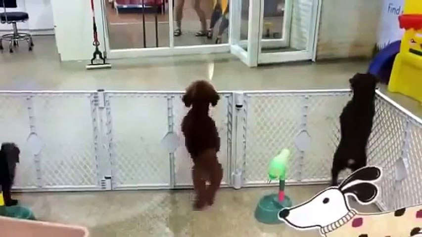 BEST FUNNY DOGS COMPILATION 2015 - 30 Minutes of Best Dog and Puppy Fails!