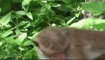 Animals mate Monkeys Humping Big Style Animal funny