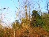 La Musique de les forêts de Jouy-en-Josas