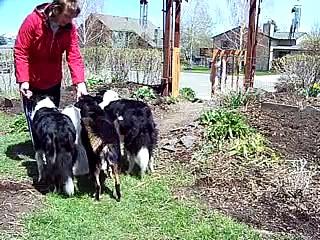 Gate Zen – Dog Training – Paws & People