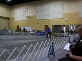 Akitas / Hoshiko Wins the 2008 Akita Club of America National Specialty Best In Sweeps Junior