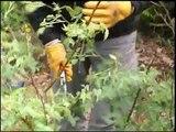 Entretien d'espaces verts - Les métiers en horticulture ornementale.wmv