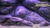 Akvarieviden dk - Make Make - Akvariebaggrund