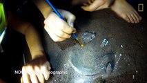 Nouvel ancêtre de l'homo sapiens découvert en afrique du sud  Homo naledi