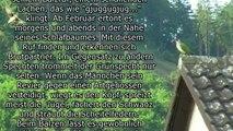 GRÜNSPECHT  (Picus viridis) Vogel des Jahres 2014