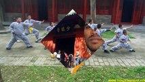 Shifu Prabhakar Reddy China Shaolin Temple Kung-fu Monk Indian Wushu Weapons Training AP Tai chi