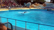 Spectacle dauphins Marineland Antibes juin 2013