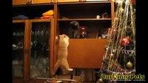 Funny cat videos 2015   Funny cat vines   Funny fails Cats Videos Cool Crazy Cats funny vines Videos